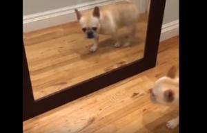 Η απίστευτη αντίδραση του σκύλου με το που βλέπει τον εαυτό του στον καθρέφτη