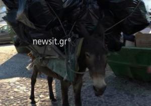 Έγκλημα χωρίς τιμωρία στη Σαντορίνη – Κραυγή αγωνίας για τα γαϊδουράκια [pics]