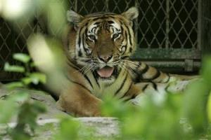 """Γερμανία: Άκυρος ο πανικός για τα λιοντάρια και τις τίγρεις που το """"έσκασαν"""""""