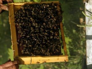 Εύβοια: Τον σκότωσαν οι μέλισσες μετά από τροχαίο – Η μεγάλη ατυχία του ψαρά που καθόταν αμέριμνος!