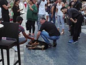 Κόρινθος: Οργή για τις φόλες σε πεζόδρομο – Έσωσαν τον σκύλο που έδινε μάχη να κρατηθεί στη ζωή – video