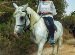 Θεσπρωτία: Τραυματίστηκε τουρίστρια που έκανε ιππασία