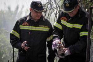 Ναύπλιο: Συναγερμός για μεγάλη φωτιά σε σπίτι – Αγώνας δρόμου από τους πυροσβέστες!