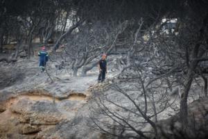 «Επίθεση» Χιώτη στην κυβέρνηση για τις φωτιές! «Κλαίμε νεκρούς κι αυτοί δίνουν παρατάσεις»