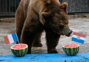 """Μουντιάλ 2018: Η αρκούδα """"έφαγε"""" το νικητή του τελικού Γαλλία – Κροατία [pics]"""