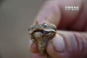 Τετ α τετ με δηλητηριώδη οχιά είχε αγρότης στο Ναύπλιο [pics, vid]