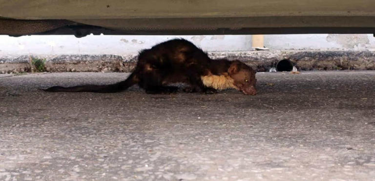 Καβάλα: Κοίταξαν κάτω από το φορτηγό και προσπαθούσαν να πιστέψουν στα μάτια τους – Οι εικόνες που είδαν [pics] | Newsit.gr