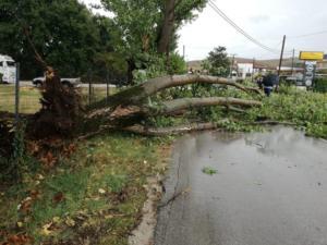 Ανεμοστρόβιλος στα Ιωάννινα ξερίζωσε δέντρο και σήκωσε στέγες σπιτιών