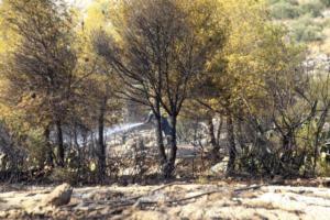 Κάρυστος: Τρία αεροπλάνα και ένα ελικόπτερο για την μεγάλη φωτιά