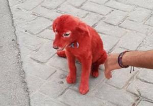 Βοιωτία: Έβαψαν κουταβάκι κόκκινο με βαφή μαλλιών! [pics]