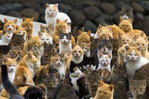 ΗΠΑ: Ξεκινούν να απογράφουν… τις γάτες στην Ουάσινγκτον