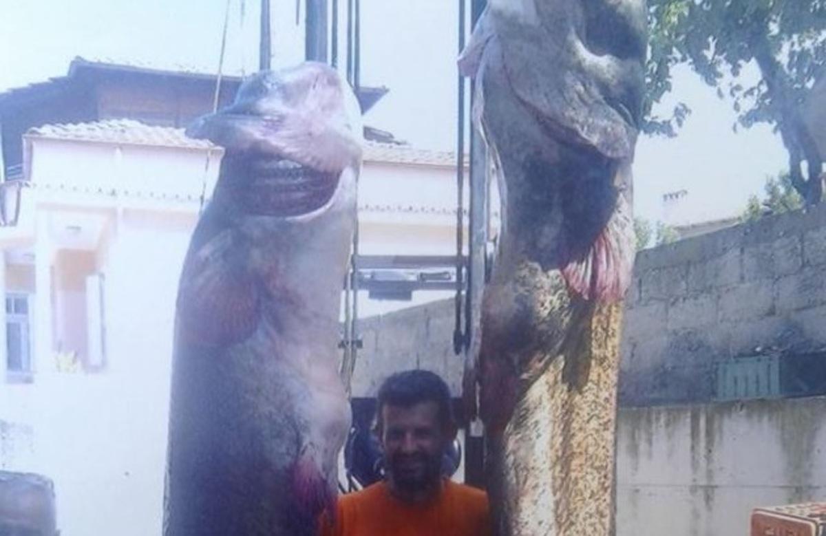 Ψαριά για Γκίνες στην Κοζάνη! Έβγαλαν γουλιανούς… τρία μέτρα – Απίστευτη εικόνα [pic]