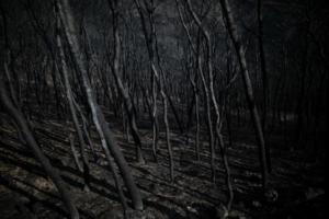 Υγειονομική «βόμβα» τα καμένα! Πνευμονολόγοι προειδοποιούν για τις τοξικές ουσίες μετά τις φωτιές