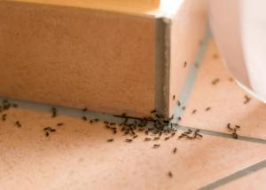 Το κόλπο για να εξαφανίσετε τα μυρμήγκια από το σπίτι