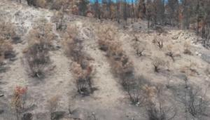 Κρήτη: Το drone αποκαλύπτει την έκταση της καταστροφής – Αυτοψία μετά τη φωτιά στις Βρύσες – video