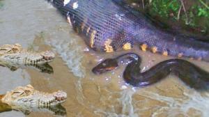 Αυστραλία: Σώθηκαν από κροκόδειλους και φίδια!
