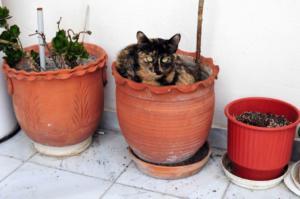 Ηλιούπολη: Άγνωστος πυροβολεί γάτες!