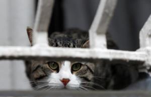 Σούπερ βραβείο σε γάτο μετά θάνατον