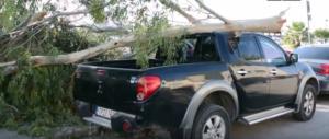 Ναύπλιο: Μεγάλο δέντρο έσπασε απ' τον αέρα και καταπλάκωσε αυτοκίνητο – video