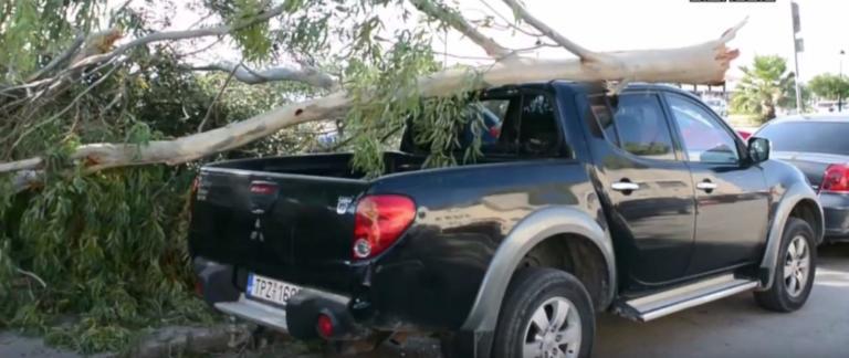Ναύπλιο: Μεγάλο δέντρο έσπασε απ' τον αέρα και καταπλάκωσε αυτοκίνητο – video | Newsit.gr