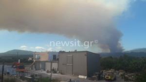 Φωτιά στα Ψαχνά – Εικόνα ντοκουμέντο από τους αναγνώστες του newsit.gr
