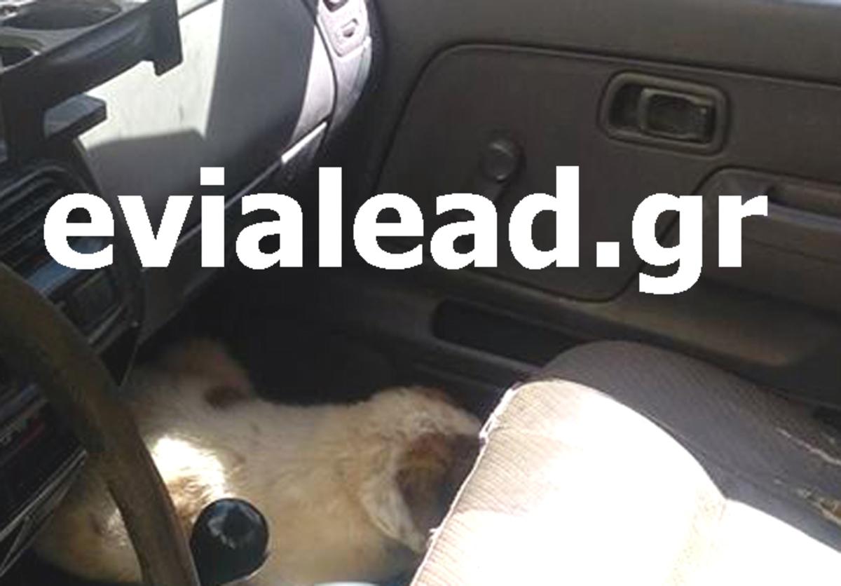 Κλειδωμένο σκυλάκι σε αυτοκίνητο για ώρες μέσα στον ήλιο – Το έσωσε η Αστυνομία!!! – video | Newsit.gr