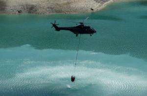 Ελβετία – καύσωνας: Χιλιάδες νεκρά ψάρια στον Ρήνο – Ο στρατός ρίχνει νερό στις διψασμένες αγελάδες