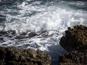 Ανατριχίλα! Έπνιξαν σκύλο στην Πάρο – Έδεσαν πέτρα στον λαιμό του και τον πέταξαν στη θάλασσα