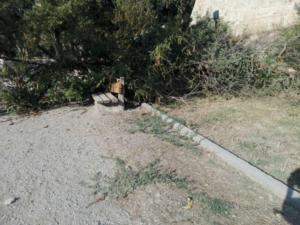 """Κρήτη: Γλίτωσε στο """"τσακ""""! Αυτό το δέντρο θα έπεφτε πάνω της! [pics]"""