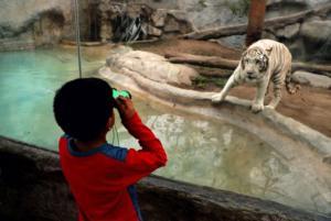 Πρόστιμα σε όσους ταΐζουν τα ζώα στον Ζωολογικό Κήπο του Πεκίνου!
