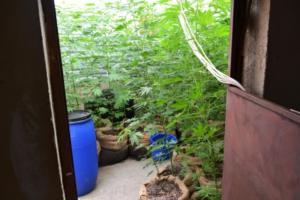 Κρήτη: Αυτό είναι το διαμέρισμα που είχε γίνει… δασάκι κάνναβης – [pics]