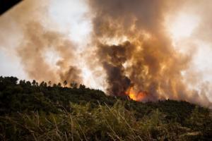 Εύβοια: Έπιασαν 32χρονο εμπρηστή! Είχε βάλει εννιά φωτιές!