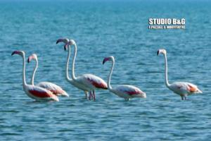 """Οι ροζ επισκέπτες """"ξαναχτύπησαν"""" στο Ναύπλιο! [pics]"""