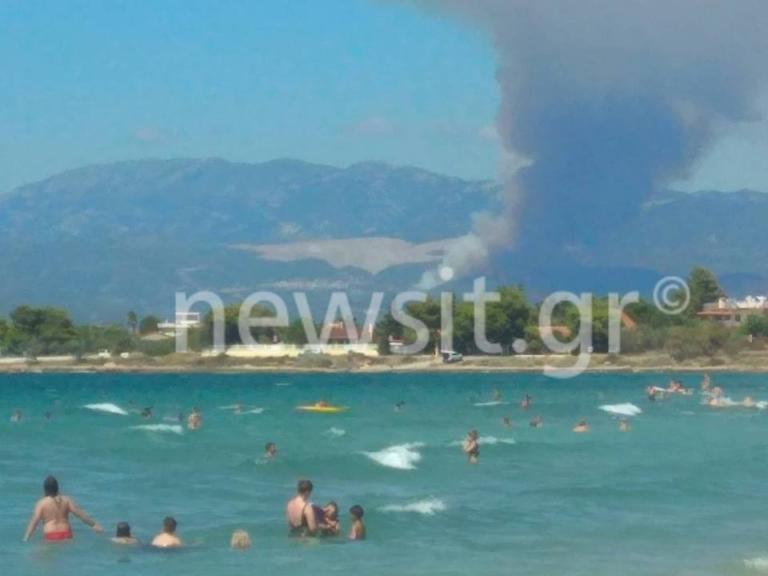 Συναγερμός στην Πυροσβεστική – Φωτιά στην Εύβοια! video | Newsit.gr