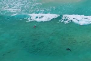 Καρχαρίας πλησιάζει επικίνδυνα… ανυποψίαστο σέρφερ! Video