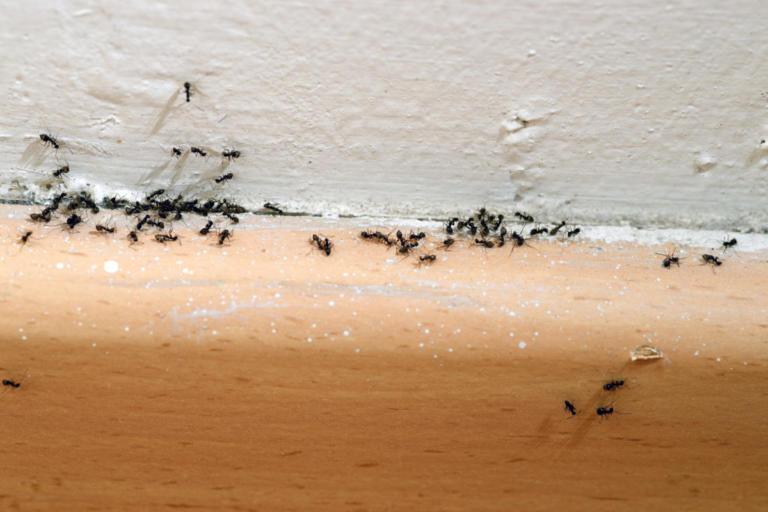Πώς να διώξετε τα μυρμήγκια από το σπίτι