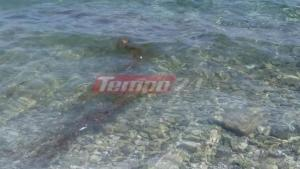 Γέμισε η θάλασσα με νεκρά ψάρια στον Ψαθόπυργο [pics]
