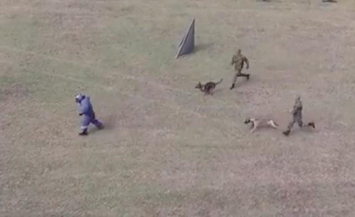 Λιτόχωρο: Οι τετράποδοι κομάντος του Στρατού Ξηράς έκαναν επίδειξη ισχύος [vid] | Newsit.gr
