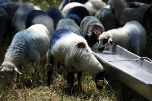 """Κιλκίς: Κραυγή αγωνίας από κτηνοτρόφους – """"Μας αφανίζουν και δεν συγκινείται κανείς""""!"""