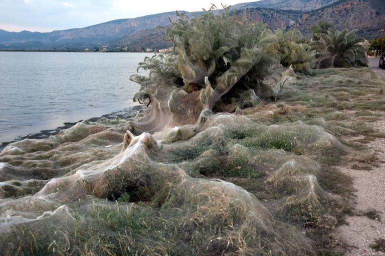 Αυτή είναι η εξήγηση για το φαινόμενο με τις αράχνες στο Αιτωλικό! | Newsit.gr