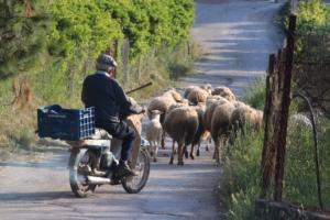 Δίπλωμα οδήγησης… ξανά στα 74 – «Απολύτως λογικό» λέει ο Σπίρτζης