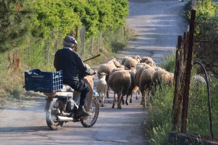 Δίπλωμα οδήγησης… ξανά στα 74 – «Απολύτως λογικό» λέει ο Σπίρτζης   Newsit.gr