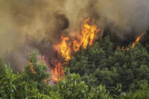 Ρόδος: Υπό έλεγχο η φωτιά στην Κυμισάλα