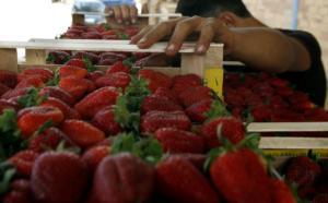 Σκάνδαλο με φράουλες στην Αυστραλία: Καρφωμένες βελόνες και σε άλλα φρούτα – Ακόμα και 10 χρόνια φυλακή στους δράστες