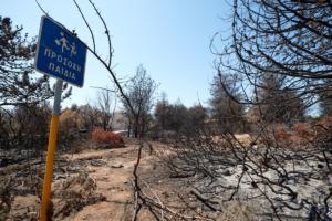 1980 – 2017: Πάνω από 16 εκατομμύρια στρέμματα δασών έχουν κάψει οι φωτιές στην Ελλάδα