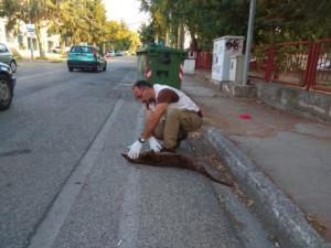 Καστοριά: Αυτοκίνητο χτύπησε και σκότωσε βίδρα – Οι εικόνες από το σημείο με το σπάνιο θηλαστικό [pics]