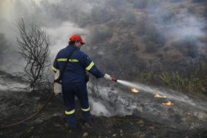 Φωτιά στη Βέργα Καστοριάς