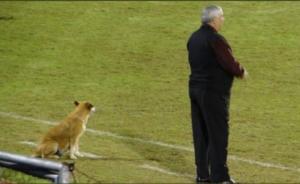 """Η απίστευτη αδέσποτη σκυλίτσα που… έγινε """"βοηθός"""" προπονητή! [pic]"""