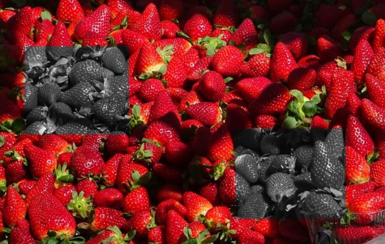 Αδίστακτοι! Έβαζαν βελόνες ραψίματος μέσα σε φράουλες που πωλούνται σε σούπερ-μάρκετ στην Αυστραλία! | Newsit.gr