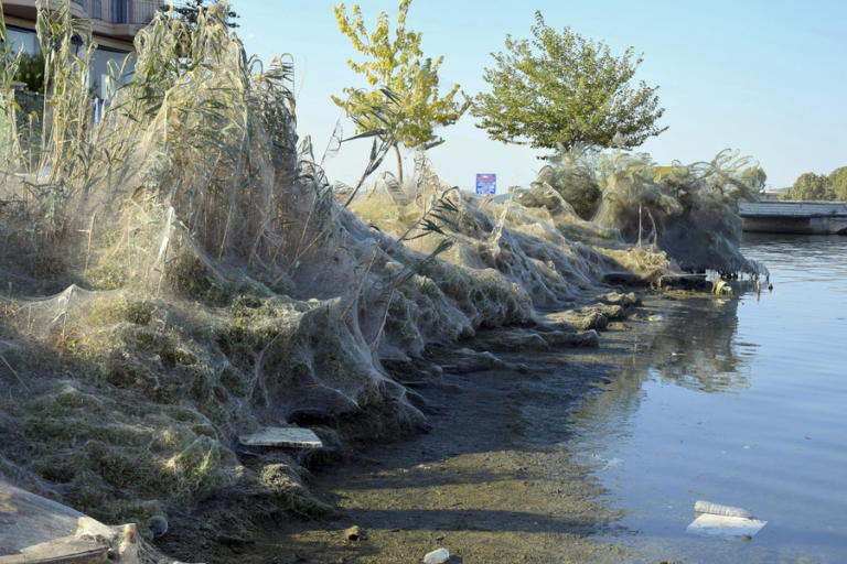 Οι αράχνες του Αιτωλικού «κατέκλυσαν» τον πλανήτη [pics] | Newsit.gr